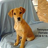 Adopt A Pet :: Tennyson meet me 1/6 - Manchester, CT