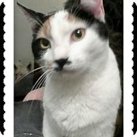 Adopt A Pet :: Charisma - Trevose, PA