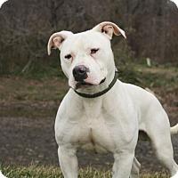 Adopt A Pet :: Joey A34697195 - Westampton, NJ