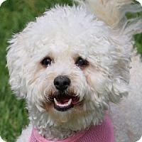 Adopt A Pet :: Lillie - La Costa, CA