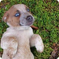 Adopt A Pet :: Petunia - Washington, DC