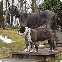 Adopt A Pet :: Higgins & Harley - Westport, CT