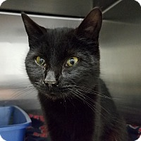Adopt A Pet :: Jimetta - Elyria, OH