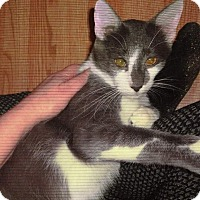 Adopt A Pet :: Maddox and Chauncy - brewerton, NY