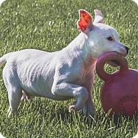 Adopt A Pet :: SKY - Elyria, OH