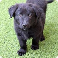 Adopt A Pet :: Stuart - Phoenix, AZ