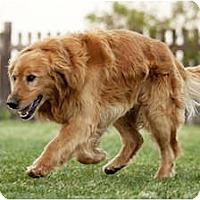Adopt A Pet :: Seth - Denver, CO