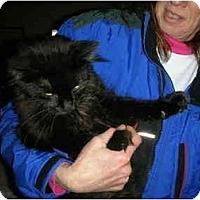 Adopt A Pet :: Spooky - Washington Terrace, UT