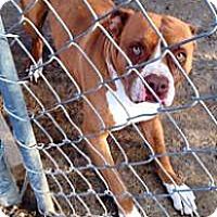 Adopt A Pet :: Missoni - Fowler, CA