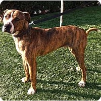Adopt A Pet :: Tiger - Fowler, CA
