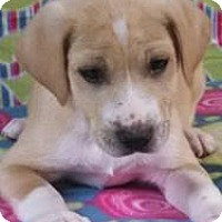 Adopt A Pet :: Leonard - Bedminster, NJ