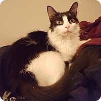 Adopt A Pet :: Neosho - St. Louis, MO