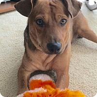 Adopt A Pet :: Tucker - Knoxville, TN