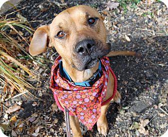 Boxer Mix Dog for adoption in Wilmington, Delaware - Bella