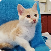 Adopt A Pet :: Ernie - Lexington, KY