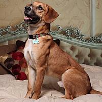 Adopt A Pet :: Waylon - Jackson, TN