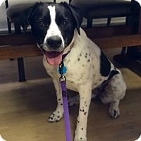 Adopt A Pet :: Lucy Lu in CT - Manchester, CT