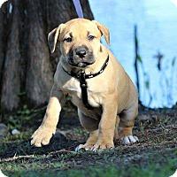 Adopt A Pet :: Reina - SOUTHINGTON, CT