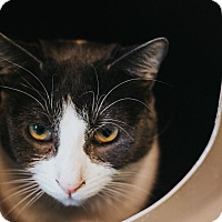 Adopt A Pet :: Bob - Indianapolis, IN