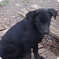 Adopt A Pet :: WINDY - Berwick, ME