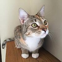 Adopt A Pet :: ZENA - Woodstock, GA