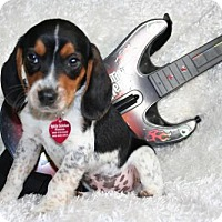 Adopt A Pet :: Paul - Sioux Falls, SD