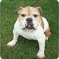 Adopt A Pet :: Presley - Winder, GA