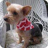 Adopt A Pet :: Lily Rose - Leesburg, FL