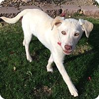 Adopt A Pet :: Emmy - Scottsdale, AZ