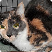 Adopt A Pet :: Blossom - Chattanooga, TN