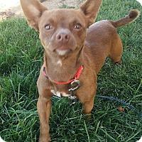Adopt A Pet :: Dan - Meridian, ID