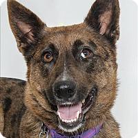 Adopt A Pet :: Cami - San Luis Obispo, CA
