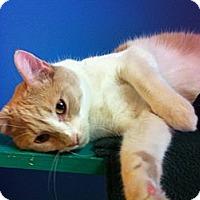 Adopt A Pet :: Conlan - Topeka, KS