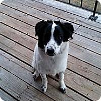 Adopt A Pet :: Lexi (IN New England) - Brattleboro, VT
