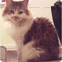 Adopt A Pet :: Isabella - Summerville, SC