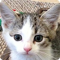 Adopt A Pet :: LORI - 2013 - Hamilton, NJ
