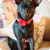 Adopt A Pet :: Ebony - Seattle, WA
