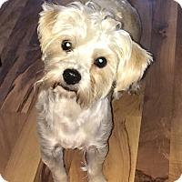 Adopt A Pet :: Buddy - Russellville, KY