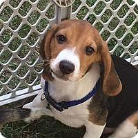Adopt A Pet :: Rufus - Marlton, NJ