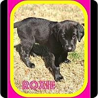 Adopt A Pet :: ROXIE - Milton, GA