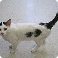 Adopt A Pet :: Becker - Gaylord, MI