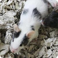 Adopt A Pet :: Marlin - Benbrook, TX