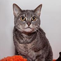 Adopt A Pet :: Aurora - Mission Hills, CA