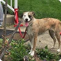 Adopt A Pet :: Carol - Dayton, OH