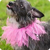 Adopt A Pet :: Bonnie - Santa Fe, TX