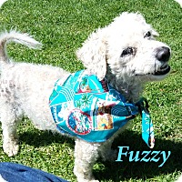 Adopt A Pet :: Fuzzy - El Cajon, CA