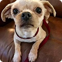 Adopt A Pet :: Coco Chanel in New England - Providence, RI