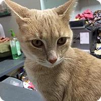 Adopt A Pet :: Oakey - Columbus, OH
