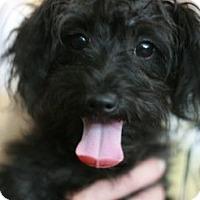 Adopt A Pet :: Harry - Canoga Park, CA