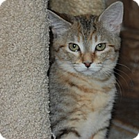 Adopt A Pet :: Princess - The Colony, TX